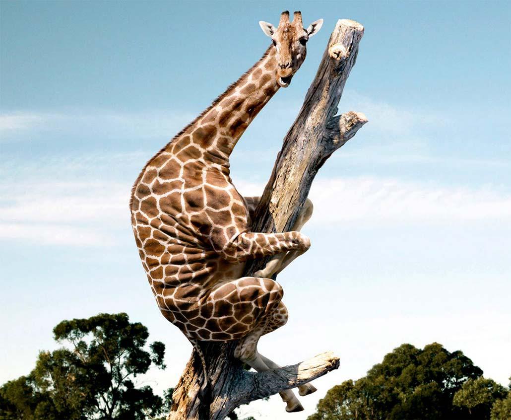 стратегия-жираф